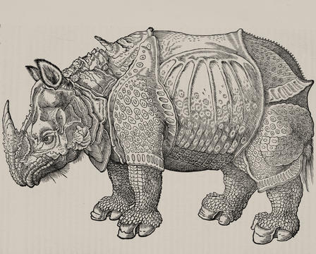 natural-histories-durer rhino